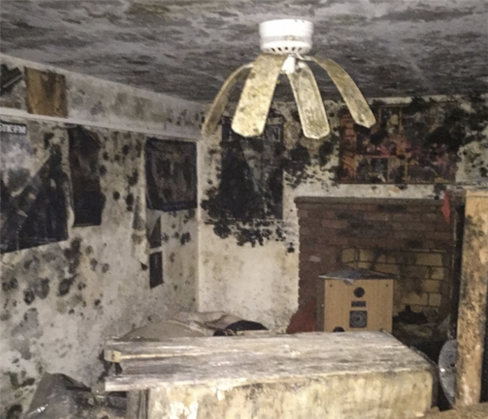 Extensive Mold Growth in Hartford