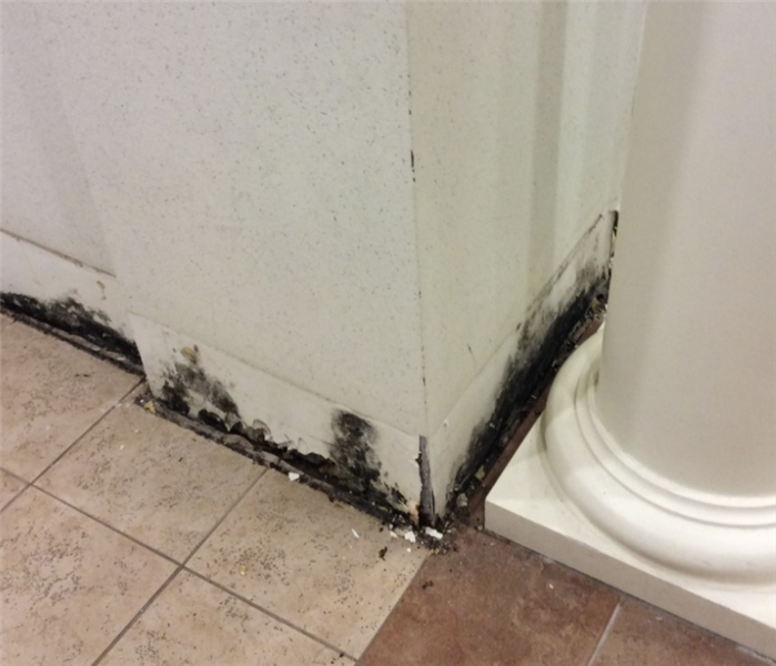 Substantial Mold Growth in Bloomfield