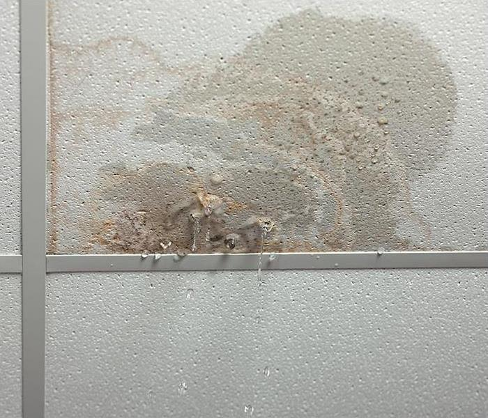 leaking ceiling with mold growing
