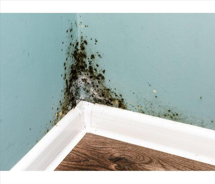 Mold on wall